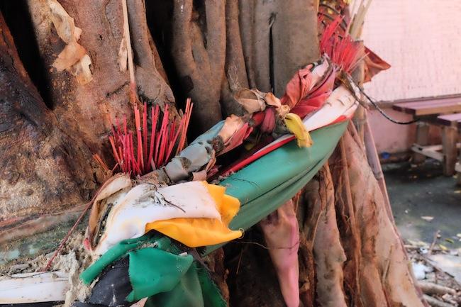Cempaka tree