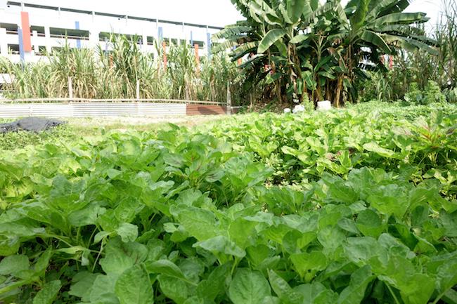 Ampang Farm